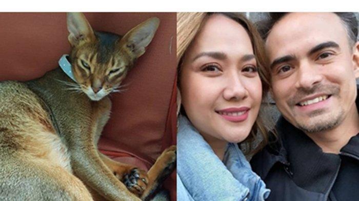 Bunga Citra Lestari BCL Bagikan Potret Kucing Kesayangan Ashraf Sinclair yang Mati Susul 'Daddy-nya'